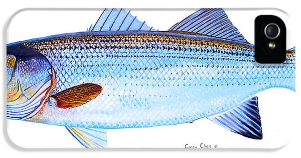 Striped Bass IPhone 5s Case