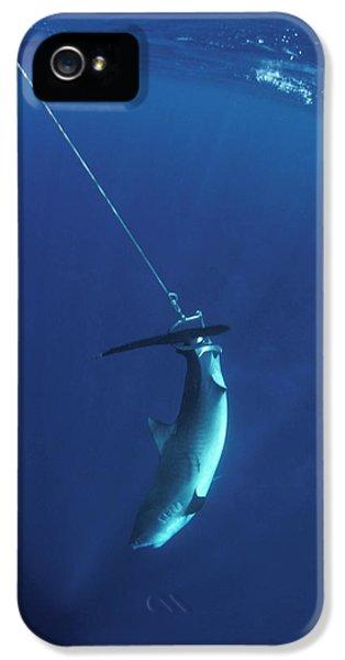 Far North Queensland iPhone 5s Case - Struggling Tiger Shark Caught by Jurgen Freund