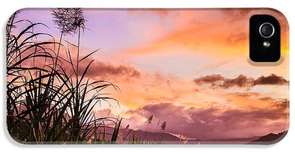 Far North Queensland iPhone 5s Case - Sugar Cane In Far North Queensland by Silken Photography