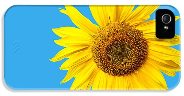 Sunflower iPhone 5s Case - Sunflower Blue Sky by Edward Fielding
