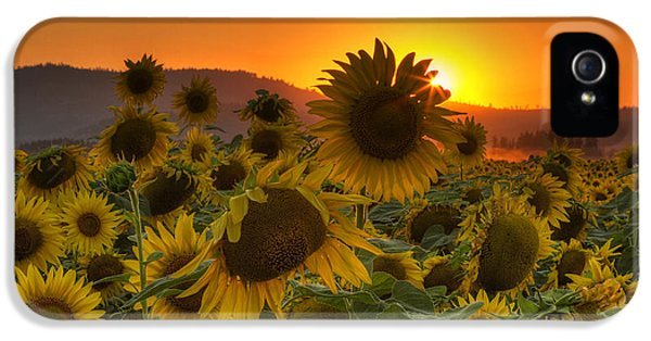 Sunflower Sun Rays IPhone 5s Case