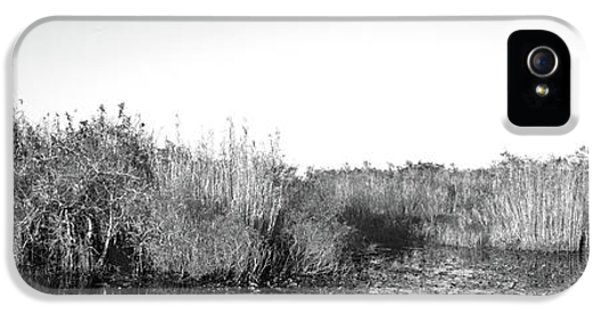 Tall Grass At The Lakeside, Anhinga IPhone 5s Case