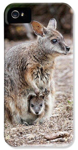 Tammar Wallaby (macropus Eugenii IPhone 5s Case