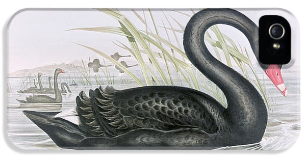 The Black Swan IPhone 5s Case by John Gould