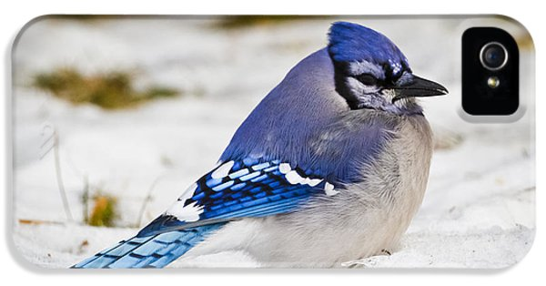 The Bluejay IPhone 5s Case by Ricky L Jones