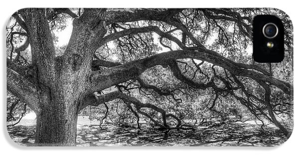 The Century Oak IPhone 5s Case by Scott Norris