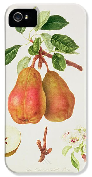 The Chaumontelle Pear IPhone 5s Case by William Hooker