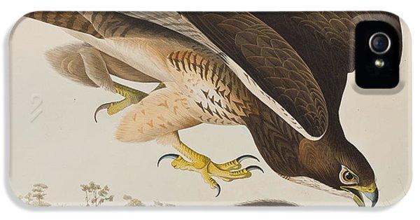 Buzzard iPhone 5s Case - The Common Buzzard by John James Audubon