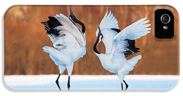 Crane iPhone 5s Case - The Dance Of Love by C. Mei
