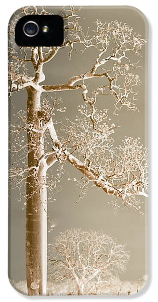 The Dreaming Tree IPhone 5s Case