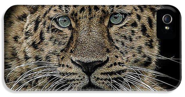 Leopard iPhone 5s Case - The Interrogator  by Paul Neville
