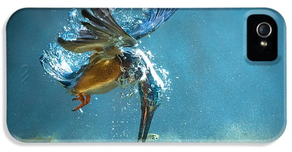 The Kingfisher IPhone 5s Case