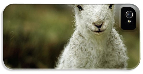 Sheep iPhone 5s Case - The Lamb by Angel Ciesniarska