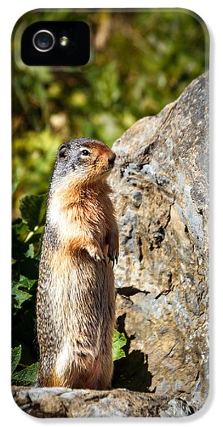 The Marmot IPhone 5s Case by Robert Bales