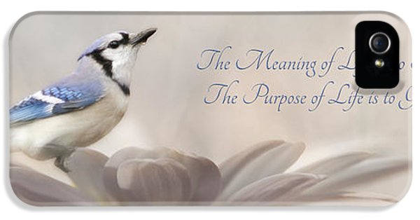 Bluejay iPhone 5s Case - The Meaning Of Life by Lori Deiter