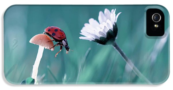 Macro iPhone 5s Case - The Story Of The Lady Bug That Tries To Convice The Mushroom To Have A Date With The Beautiful Daisy by Fabien Bravin