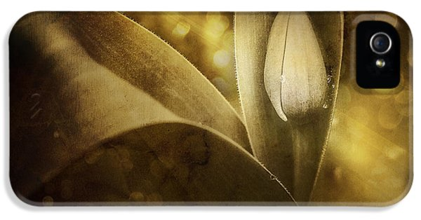 Tulip iPhone 5s Case - The Unveiling 2 by Scott Norris