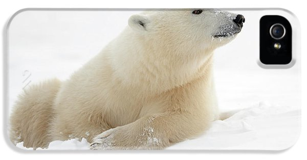 Polar Bear iPhone 5s Case - There's Something In The Air by Marco Pozzi