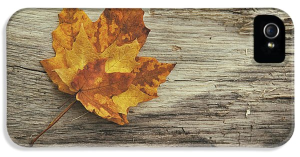 Three Leaves IPhone 5s Case by Scott Norris