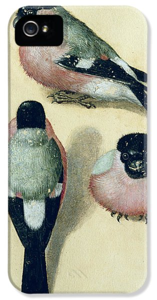 Three Studies Of A Bullfinch IPhone 5s Case
