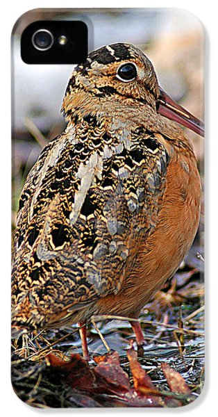 Timberdoodle The American Woodcock IPhone 5s Case