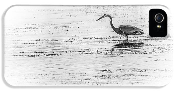 Sandpiper iPhone 5s Case - Time For Fast Food by Marvin Spates