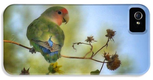 Lovebird iPhone 5s Case - To Love A Lovebird by Saija  Lehtonen