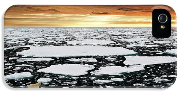Polar Bear iPhone 5s Case - Towards An Uncertain Future... by Marco Gaiotti