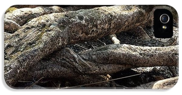 Detail iPhone 5s Case - Tree Roots  by Sean Cahill