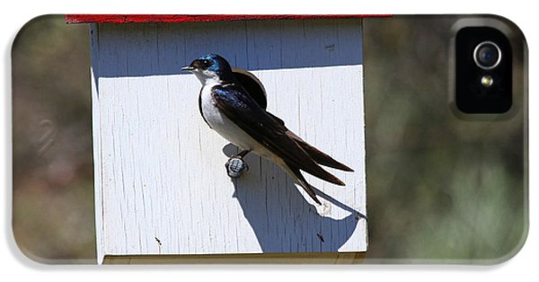 Tree Swallow Home IPhone 5s Case by Mike  Dawson