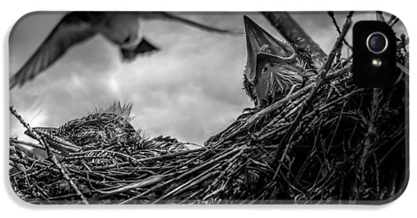 Swallow iPhone 5s Case - Tree Swallows In Nest by Bob Orsillo