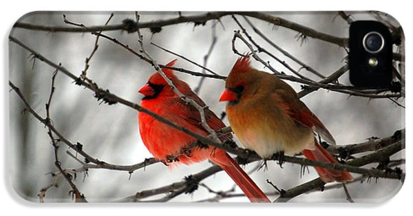 Cardinal iPhone 5s Case - True Love Cardinal by Peggy Franz