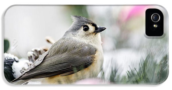 Tufted Titmouse Portrait IPhone 5s Case by Christina Rollo