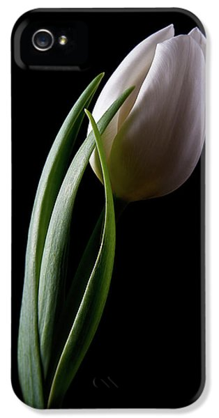 Tulip iPhone 5s Case - Tulips IIi by Tom Mc Nemar