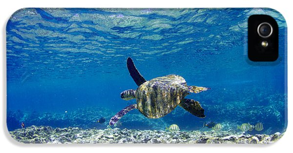 Reptiles iPhone 5s Case - Turtle Cruise by Sean Davey