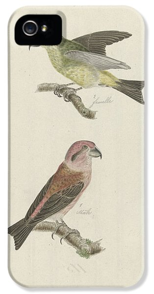Crossbill iPhone 5s Case - Two Crossbills, Possibly Christiaan Sepp by Quint Lox