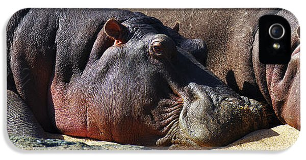 Two Hippos Sleeping On Riverbank IPhone 5s Case