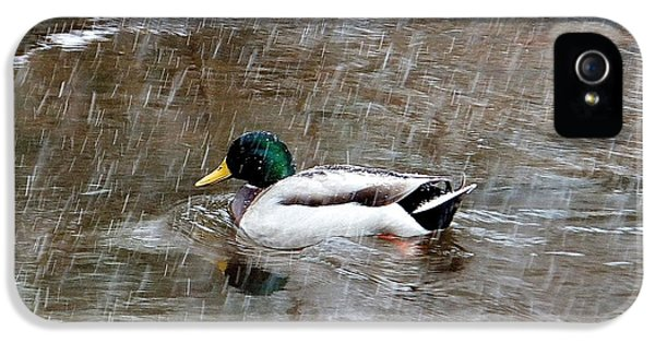 IPhone 5s Case featuring the photograph Un Froid De Canard by Marc Philippe Joly