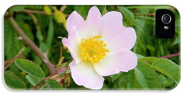 Vert Jaune Rose IPhone 5s Case