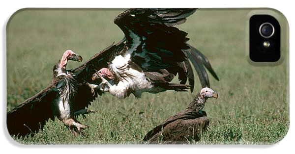 Vulture Fight IPhone 5s Case