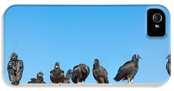 Vultures On Anhinga Trail, Everglades IPhone 5s Case