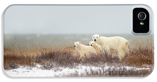 Polar Bear iPhone 5s Case - Walking On The Shore by Marco Pozzi
