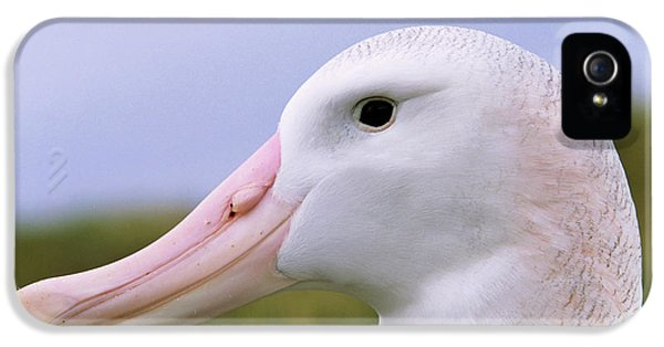 Albatross iPhone 5s Case - Wandering Albatross (diomendea Exulans by Martin Zwick