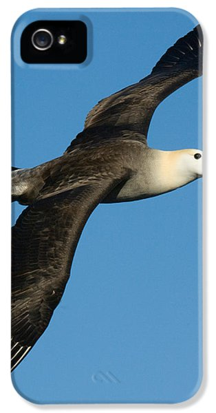 Albatross iPhone 5s Case - Waved Albatross Diomedea Irrorata by Panoramic Images