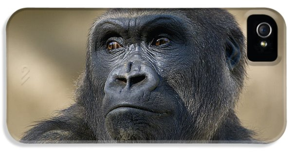 Western Lowland Gorilla Portrait IPhone 5s Case by San Diego Zoo
