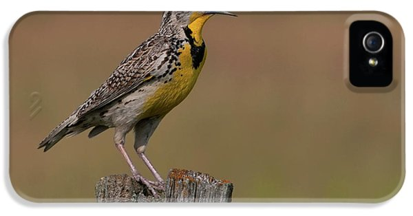 Meadowlark iPhone 5s Case - Western Meadowlark.. by Nina Stavlund