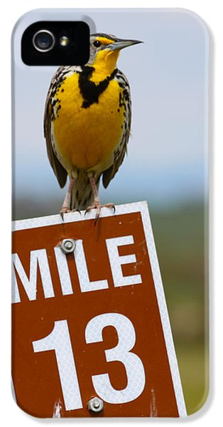 Meadowlark iPhone 5s Case - Western Meadowlark On The Mile 13 Sign by Karon Melillo DeVega