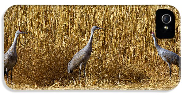 Where Is The Corn IPhone 5s Case by Mike  Dawson