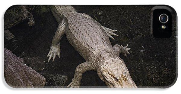 White Alligator IPhone 5s Case