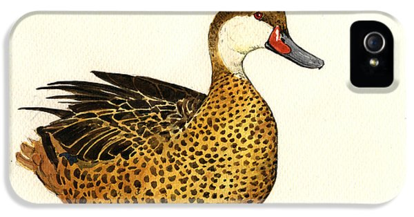 Duck iPhone 5s Case - White Cheeked Pintail by Juan  Bosco